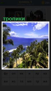 пляж  с пальмами и океаном в тропиках в солнечную погоду
