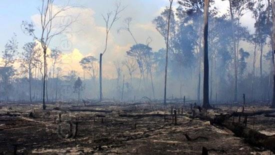 agu justica 893 milhoes desmatadores amazonia