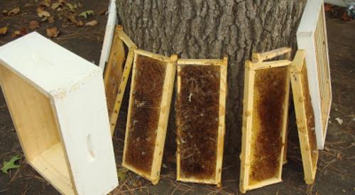 Πότε κατεβάζουμε τα πατώματα απο τα μελίσσια; Πως αποθηκεύουμε σωστά τις κηρήθρες μας;