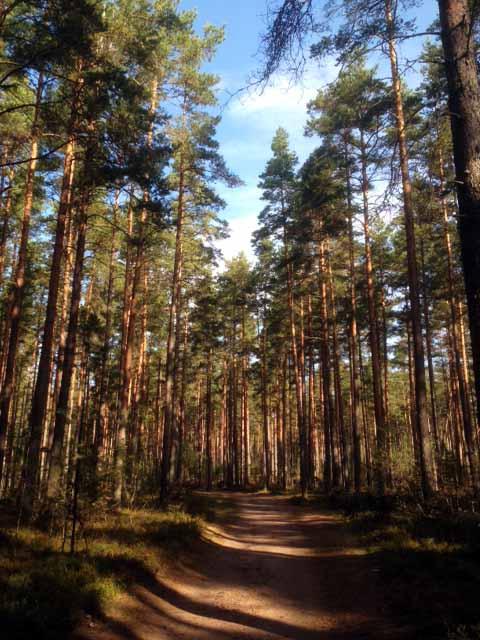 просто лес