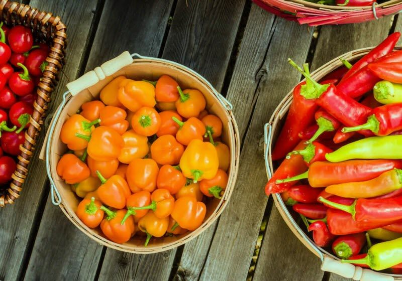 Top Ten Hottest Peppers In The World