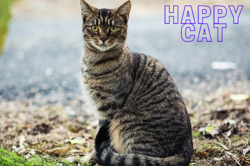Happy Cat Happy You Tips For Bonding With Your Feline Friend