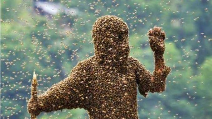 Breaking News! Warga selampaung tewas diserang segerombolan tawon