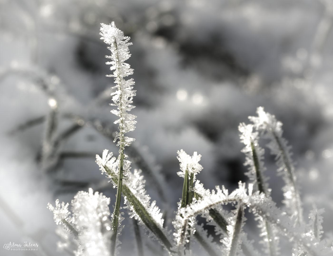 IJskristallen, macro fotografie