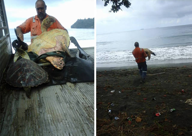 Man Buys Turtles From Food Market And Releases Them Back To The Sea.