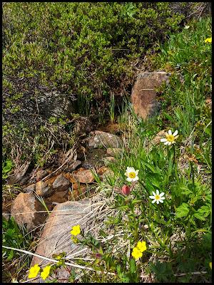 Wild Flowers at Crystal Lake