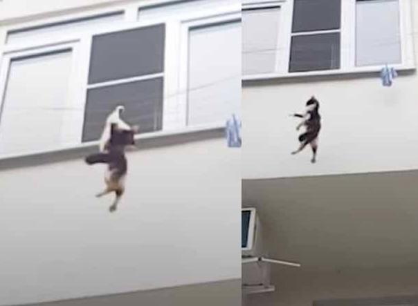 Пьяный москвич выбросил двух котов с седьмого этажа после ссоры с женой