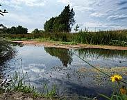 Tungelroysebeek. Bron: http://www.wpm.nl/algemeen/kaarten-en-meetgegevens/ecologie-en-waterkwaliteit-in-onze-beken.html