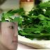 Используйте листья этого растения, чтобы избавиться от морщин, акне, темных пятен и солнечной аллергии!