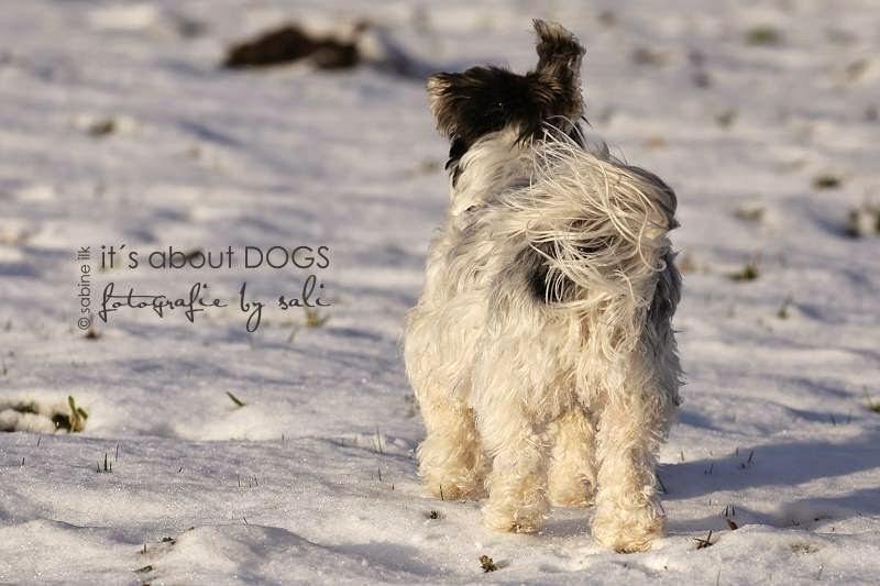 GUTEN RUTSCH INS NEUE JAHR! - ABOUT DOGS AND CHIRU [Hundeblog]