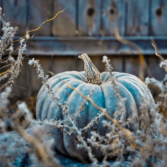 Carla Dyck Photography Blue Moon Pumpkin