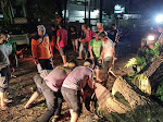 Polda Sulut Kerahkan Puluhan Samapta Guna Mengevakuasi Pohon Tumbang di Jln Arie Lasut Manado