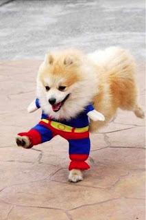 Cute Superman Dog Dress