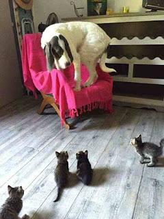 Dog afraid of kittens