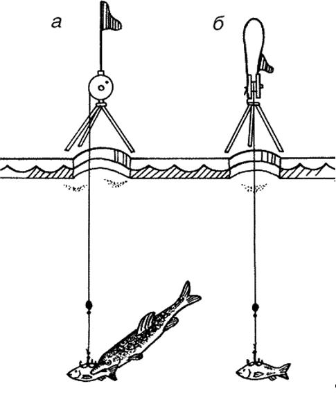 Зимние жерлицы с флажком сигнализирующим о поклевке