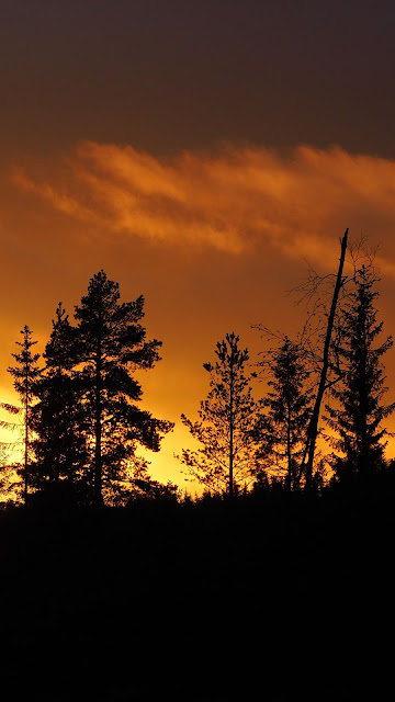 Sunset Forest Silhouette screen background