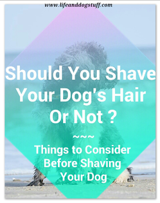 Should You Shave Your Dog's Hair Or Not?