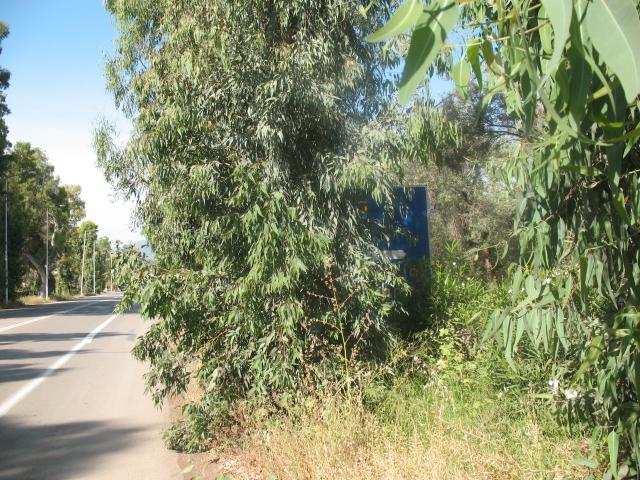 Δήμος Επιδαύρου προς πολίτες: Κλαδέψτε δένδρα και θάμνους που εμποδίζουν την διέλευση οχημάτων στους δρόμους