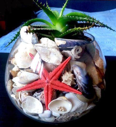 0 cara bikin terrarium kerang laut