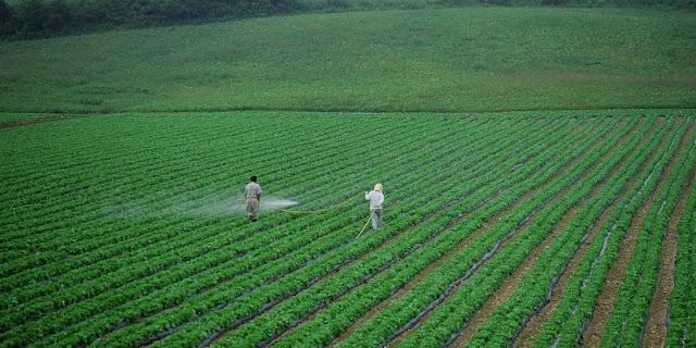 Los beneficios de los cultivos de cobertura