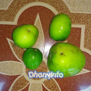 manfaat-buah-bidara