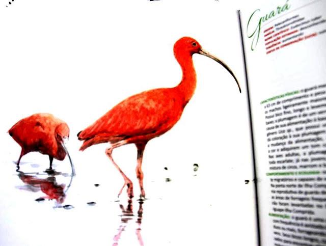 """Exposição """"Aves – Ilha Comprida"""" retorna à cidade neste verão"""