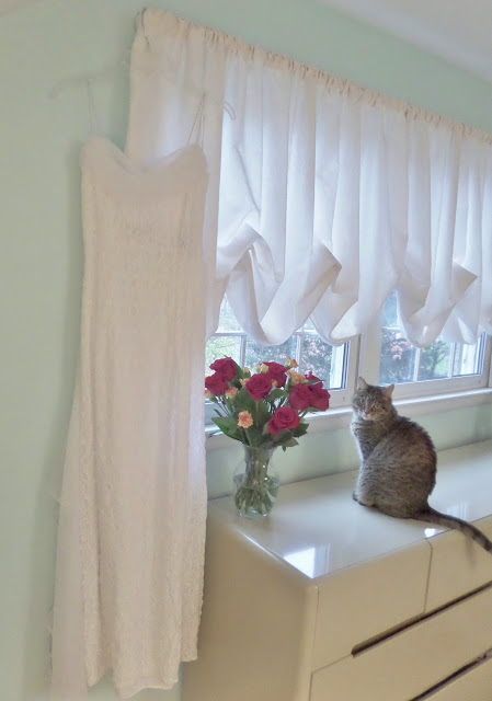 cat with wedding dress