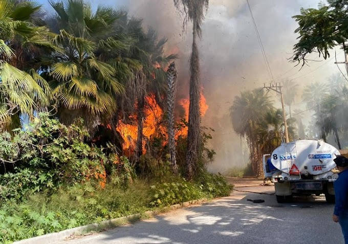 Fire in palm groves already controlled by Todos Santos firemen