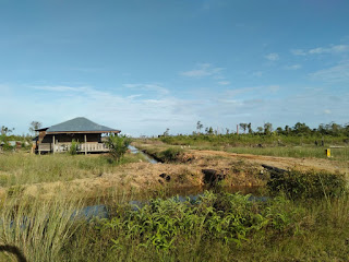 Diduga Terjadi Pembiaran Kasus Perambahan Kawasan Hutan di Pasaman Barat Sumbar