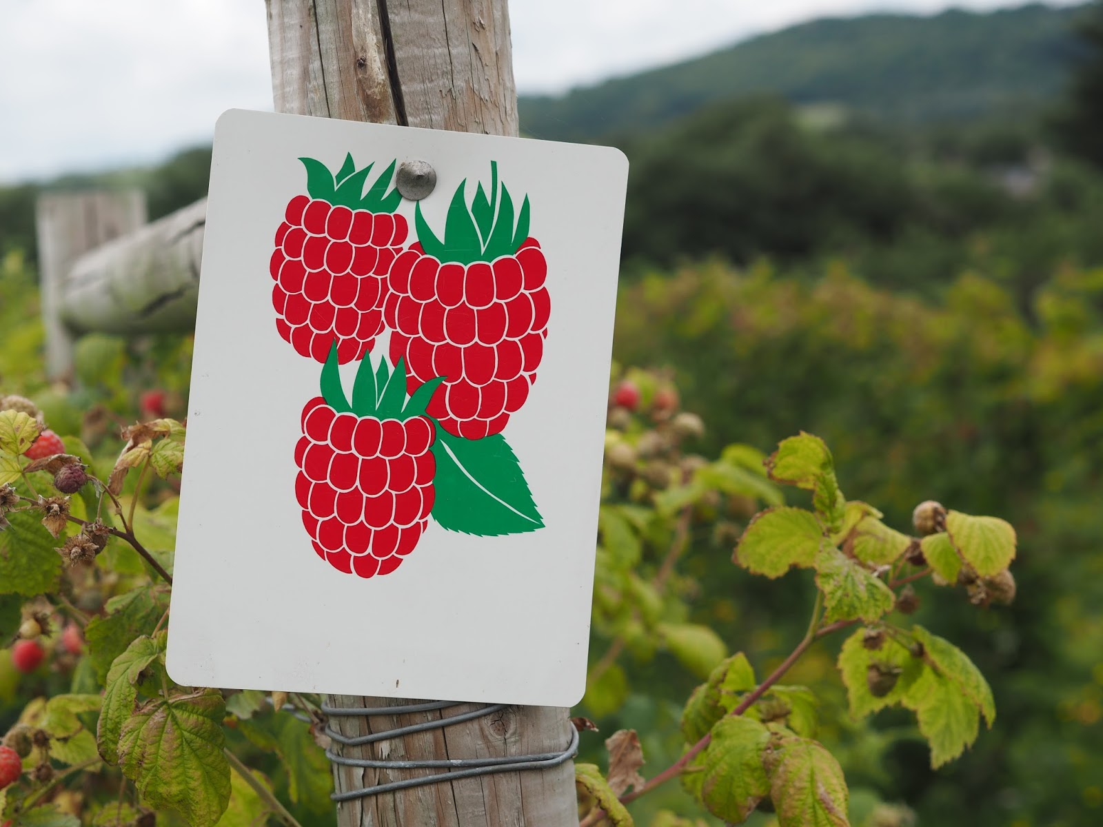 Raspberries Sign