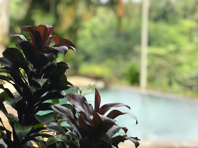 The Royal Pita Maha Resort, Ubud, Bali, Indonesia