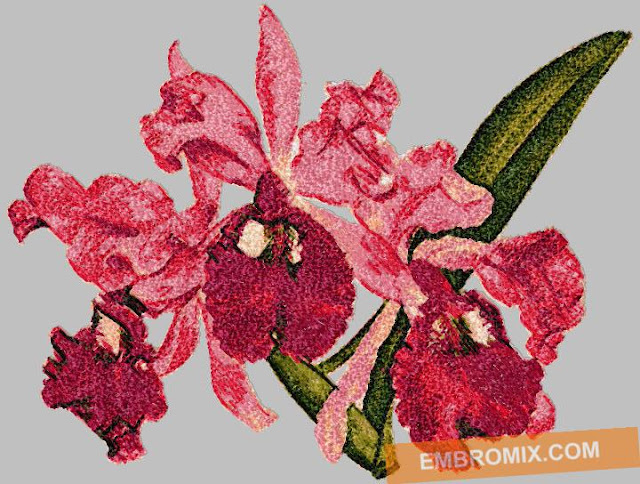 http://www.embromix.com/flowers-and-nature/flora/orchid-cattleya-gigas/prod_6036.html