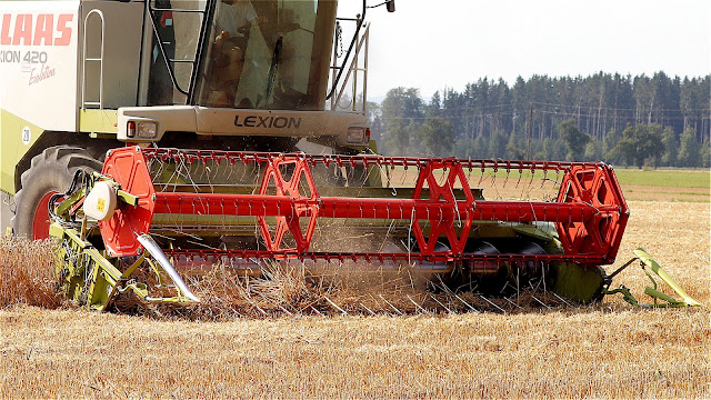 Threshing process done by combine