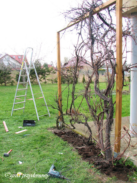 drewniana pergola pod winogrona, ogród przydomowy