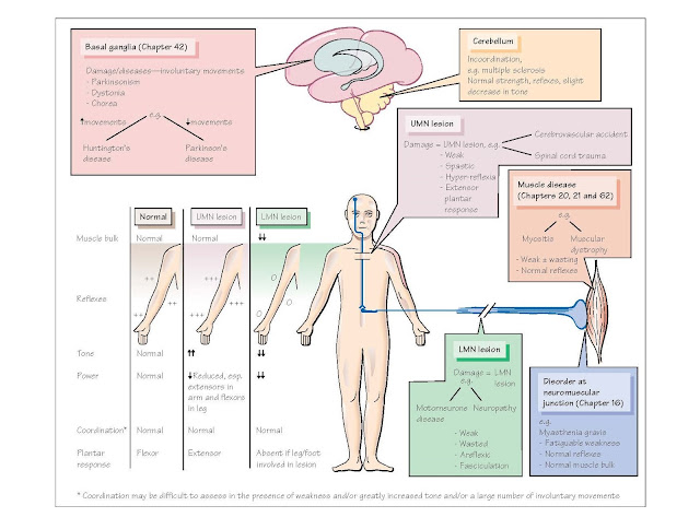 Clinical Disorders Of The Motor System