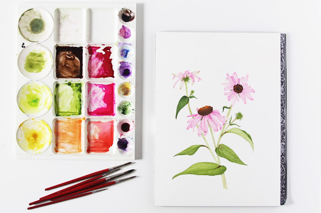 purple coneflower, echinacea, watercolor painting, botanical watercolor, Anne Butera, My Giant Strawberry