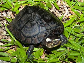 memberi-makan-kura-kura.jpg