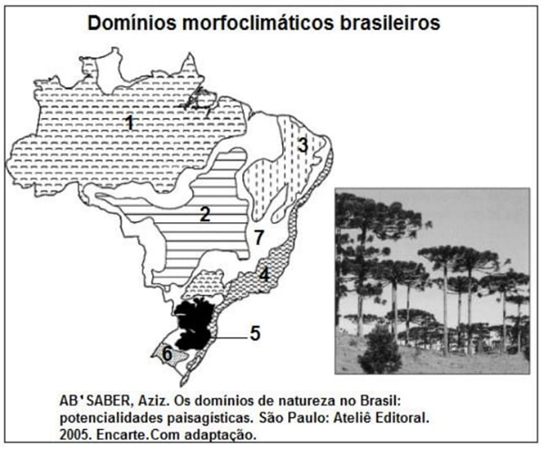 Domínios morfoclimáticos brasileiros