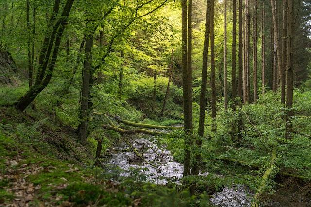 Saar-Hunsrück-Steig Etappe 20 Von Mörsdorf nach Kastellaun  Hängebrücke Geierlay Wandern im Hunsrück Traumschleifen-Hunsrück 10