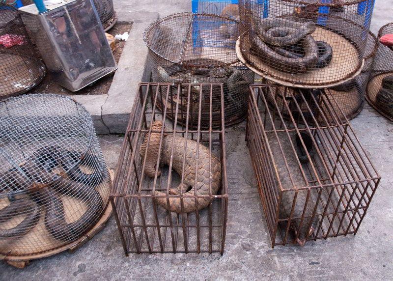 Mercado de vida selvagem