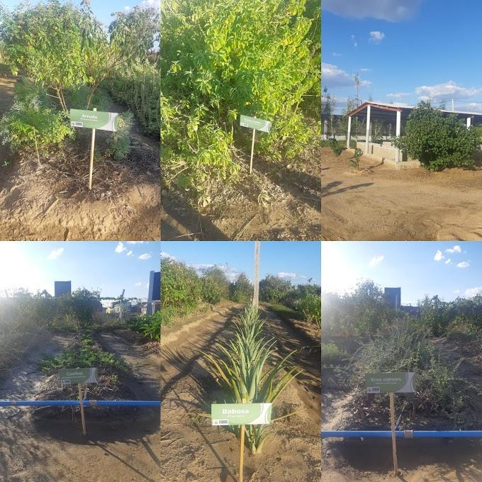 AFOGADOS: PREFEITURA VAI INAUGURAR FARMÁCIA VIVA, COM PRODUTOS FITOTERÁPICOS