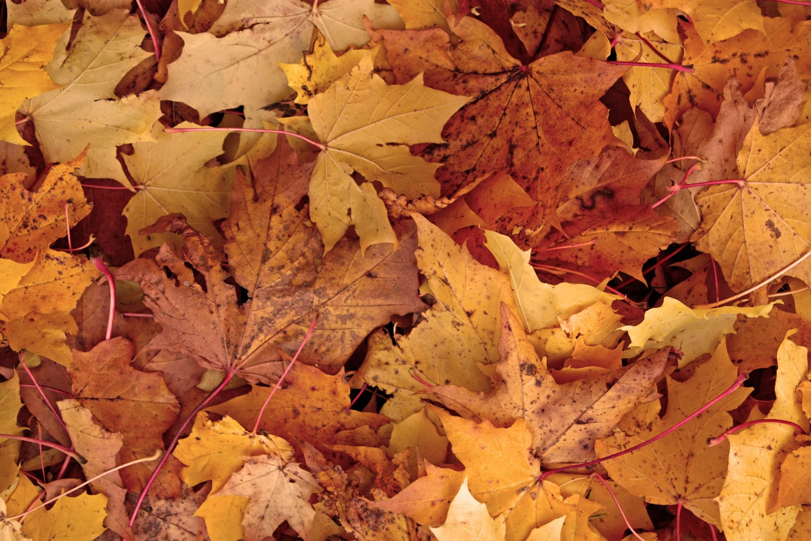 Beautiful Fall Wallpapers 214 Regrund Free Images H 246 Stbilder