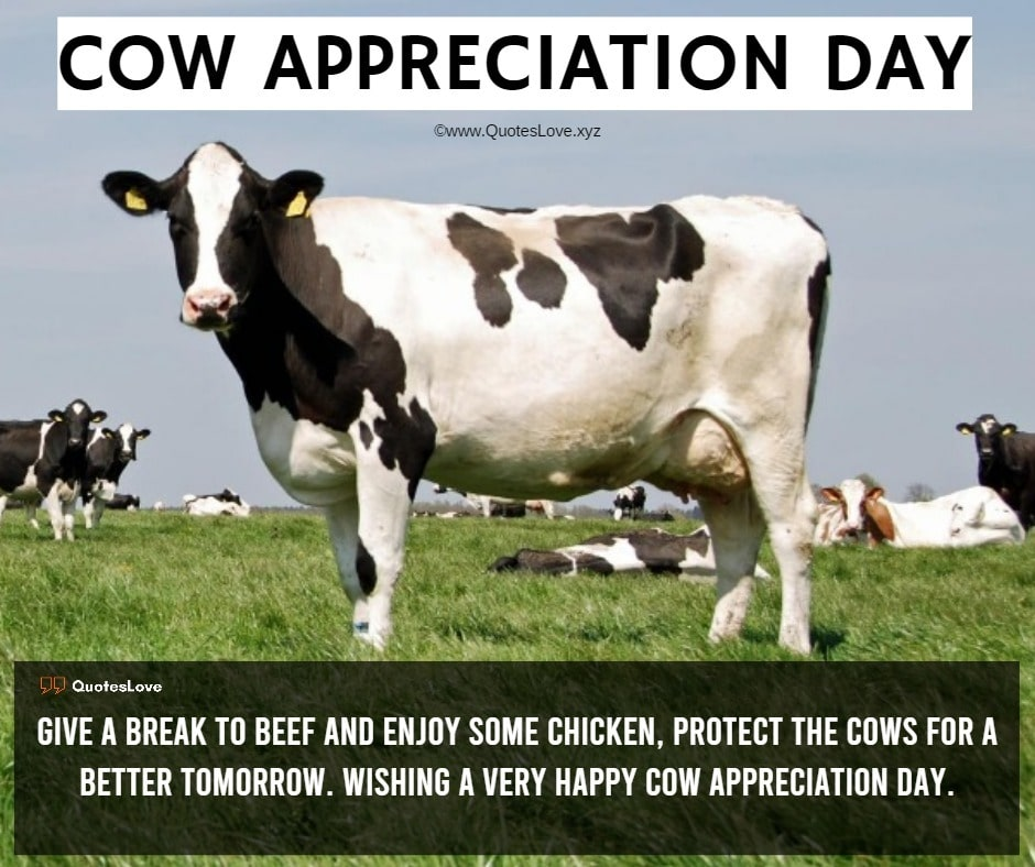 Cow Appreciation Day Quotes, Sayings, Wishes, Messages, Greetings, Images, Pictures, Poster, Wallpaper