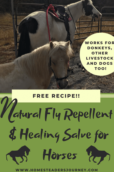 Homemade horse fly repellent and healing salve recipe! Very easy to make and works wonderfully even in the southeast! #farmhorse #homemadeflyrepellent #homesteader