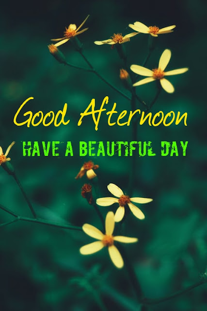 Good Afternoon Have a Nice Day.