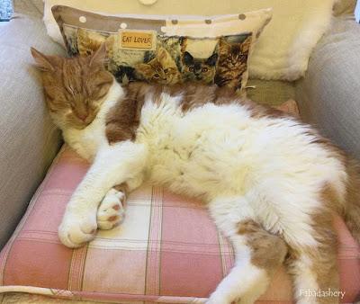 Kitten Bonnie Hunter's Grassy Creek 2020 Mystery Quilt - Part 4