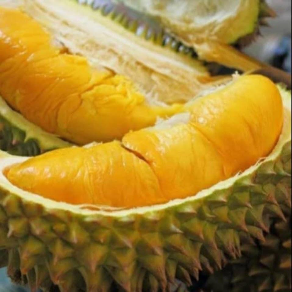 Murah bibit tanaman buah durian monthong Thailand super Mojokerto