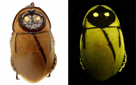 閲覧注意‼︎光るゴキブリのインスタレーションアート【Art】 ルキホルメティカ・ルケ