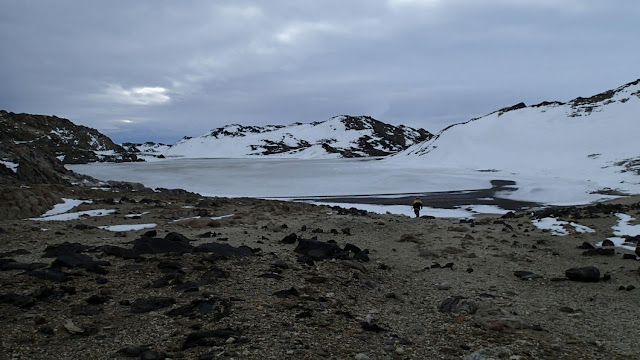 Antarctic salt-loving microbes provide insights into evolution of viruses