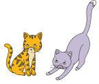 kucing abu-abu www.simplenews.me